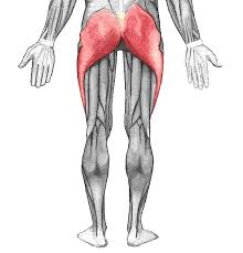 glutes_are_the_most_important_muscle_for_jumping